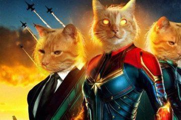 Goose the Cat veut voler votre coeur dans Captain Marvel Livestream