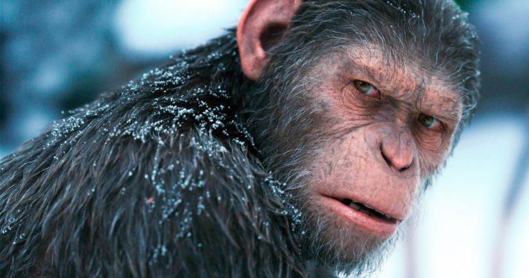 Le nouveau film La planète des singes se passe à Disney avec le réalisateur Maze Runner
