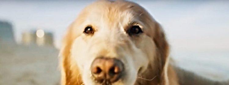 Le propriétaire d'un chien survivant du cancer rend grâce à une publicité du Super Bowl de 6 millions de dollars