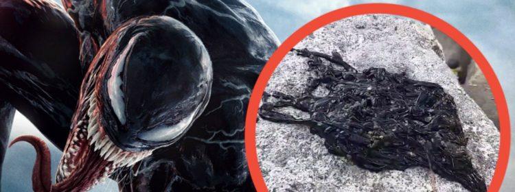 Le vrai venin Symbiote découvert dans une vidéo virale fait flipper Internet